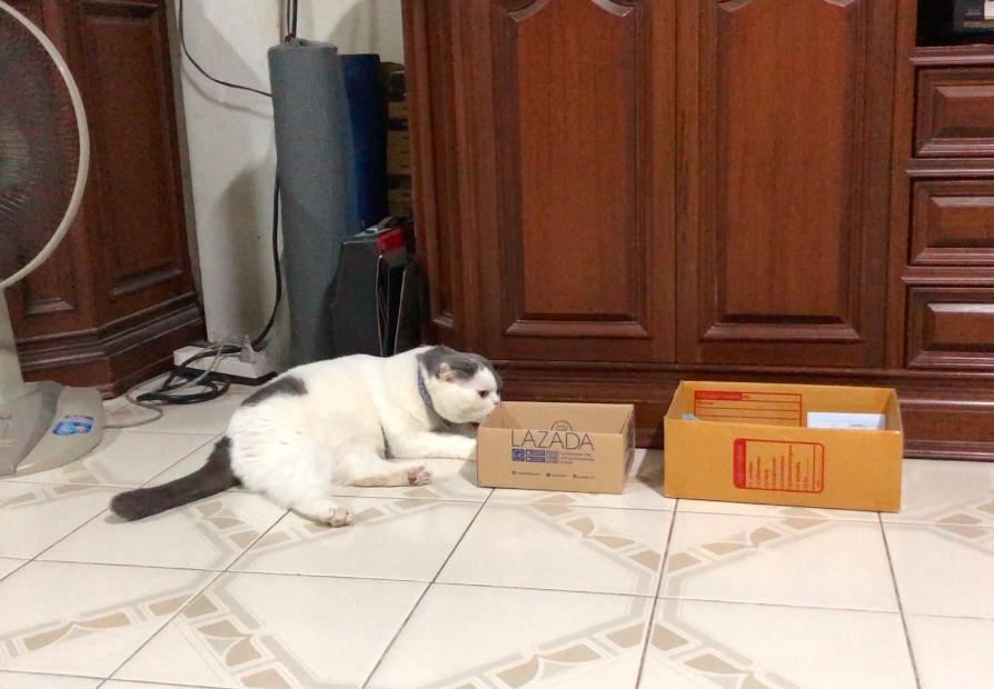 กล่องลาซาด้าเล็กไปแมวก็ไม่ไหวเหมือนกัน