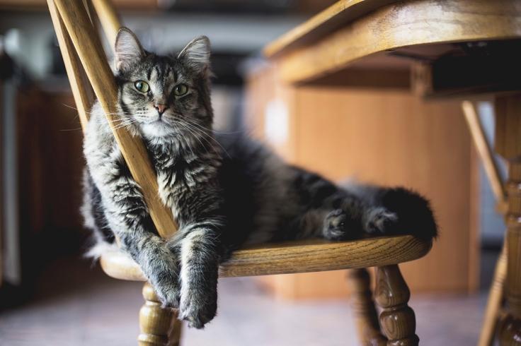 ป้องกันแมวเป็นฮีทสโตรก