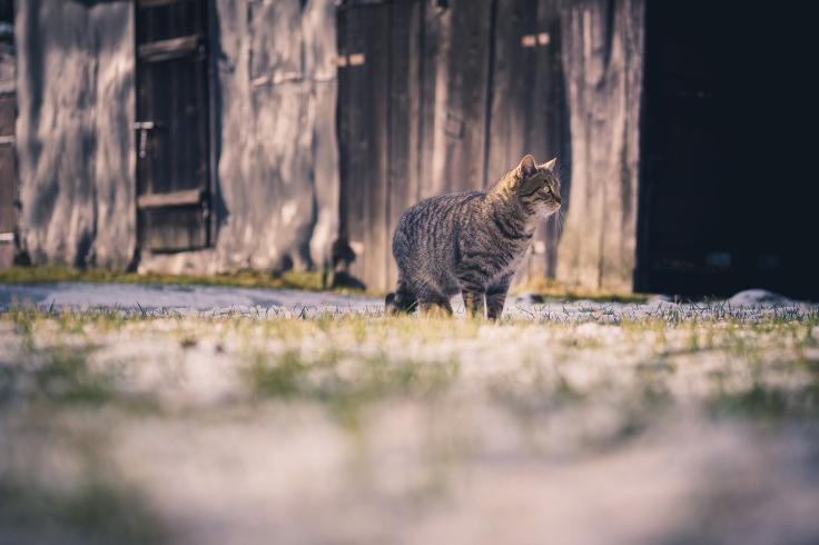 แมวเป็นฮีทสโตรก