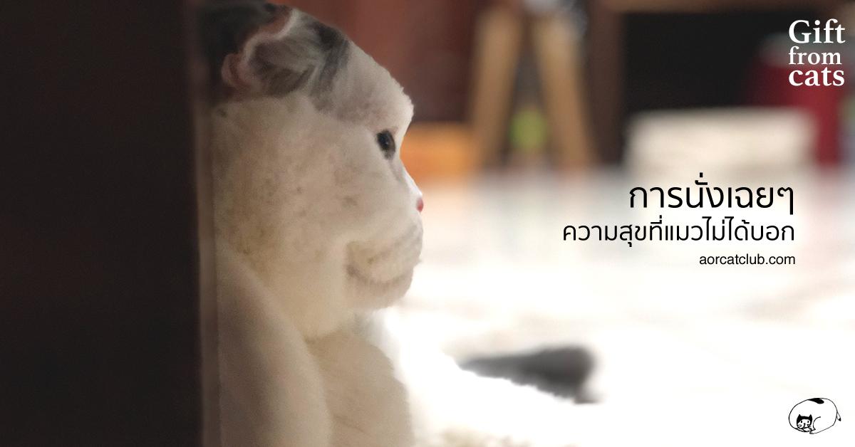 ทำไมแมวดูมีความสุขจัง อิจฉาแมว