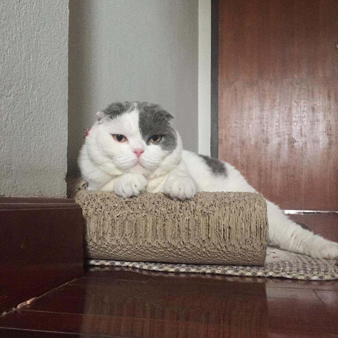 แมวคิดอะไรอยู่