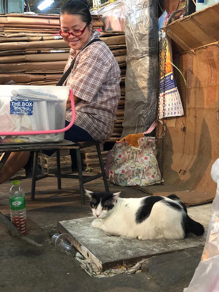 แมวจรอ้อนเก่งที่ปากคลองตลาด