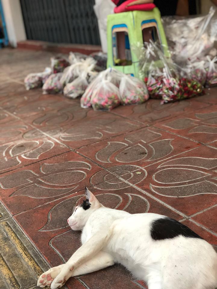 แมวชอบกลิ้งกับพื้น