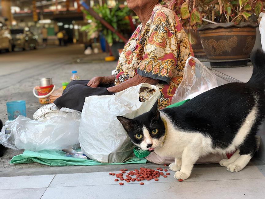 แมวที่วัดใหม่เสนาฯ น่ารัก