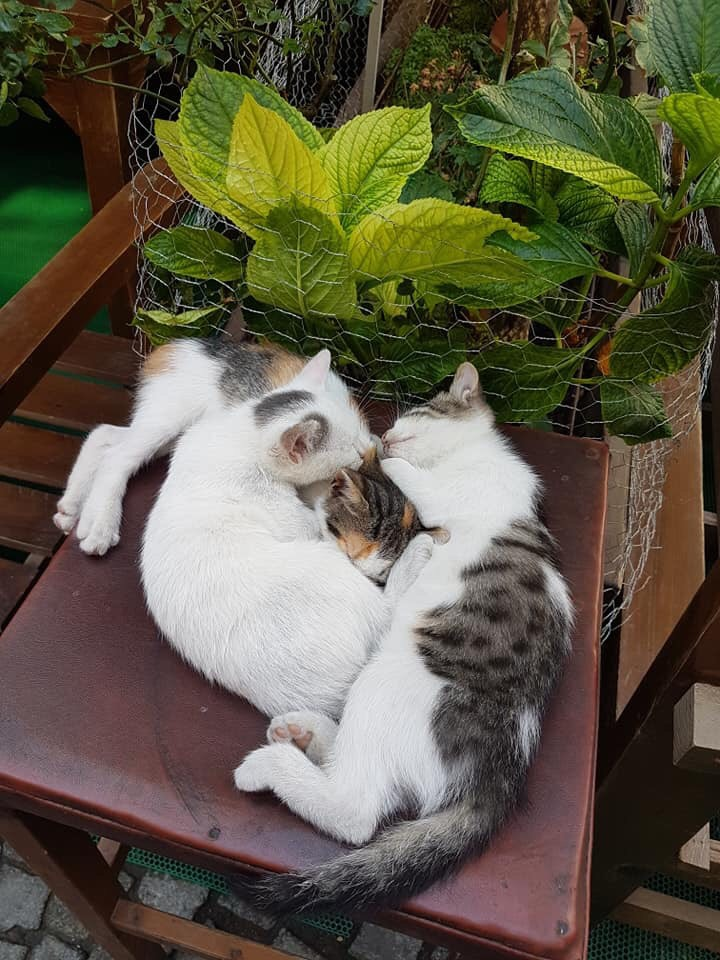 แมวชอบอยู่เป็นครอบครัว