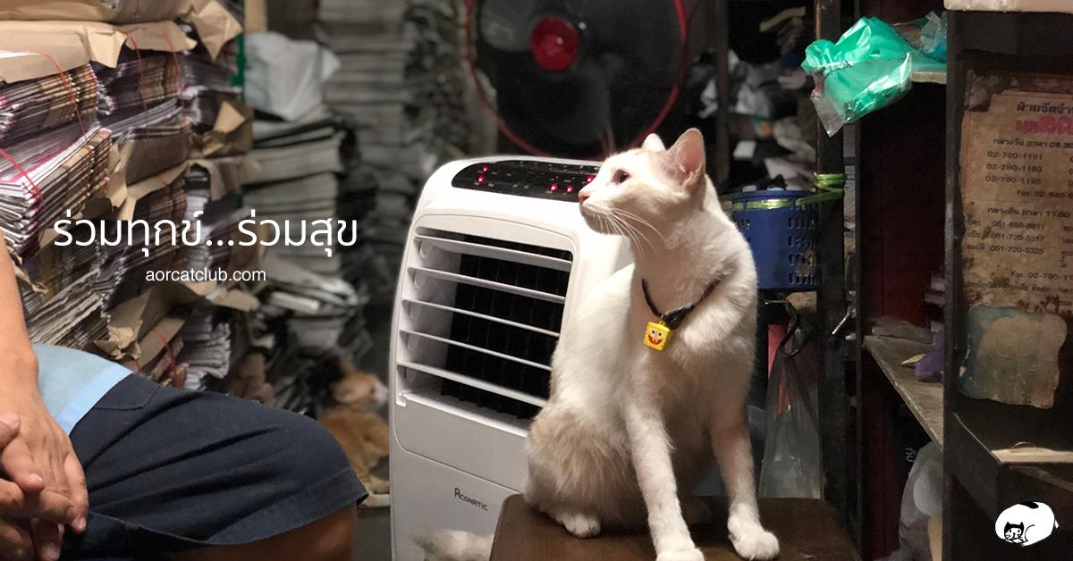 แมวรักเจ้าของ