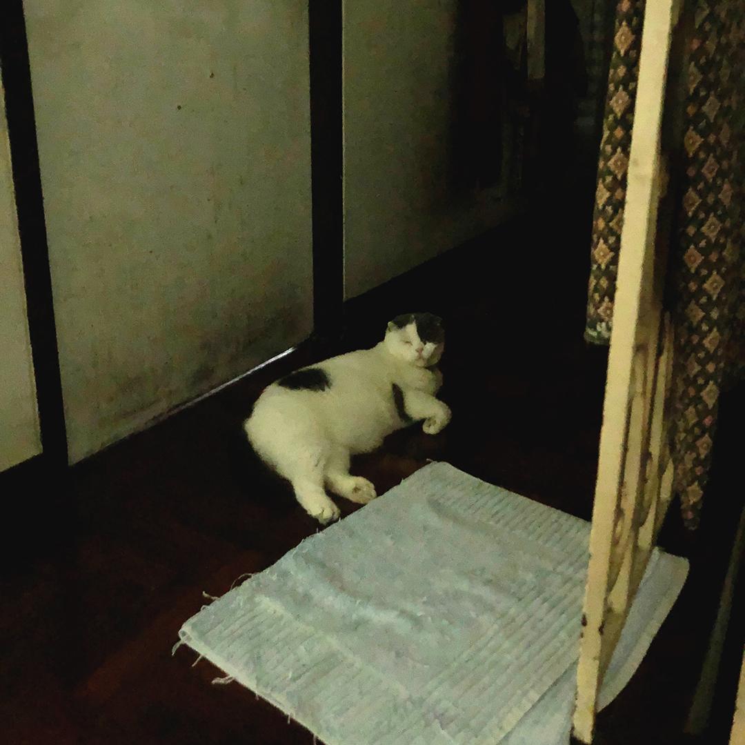 แมวนอนกลางวันตื่นกลางคืน
