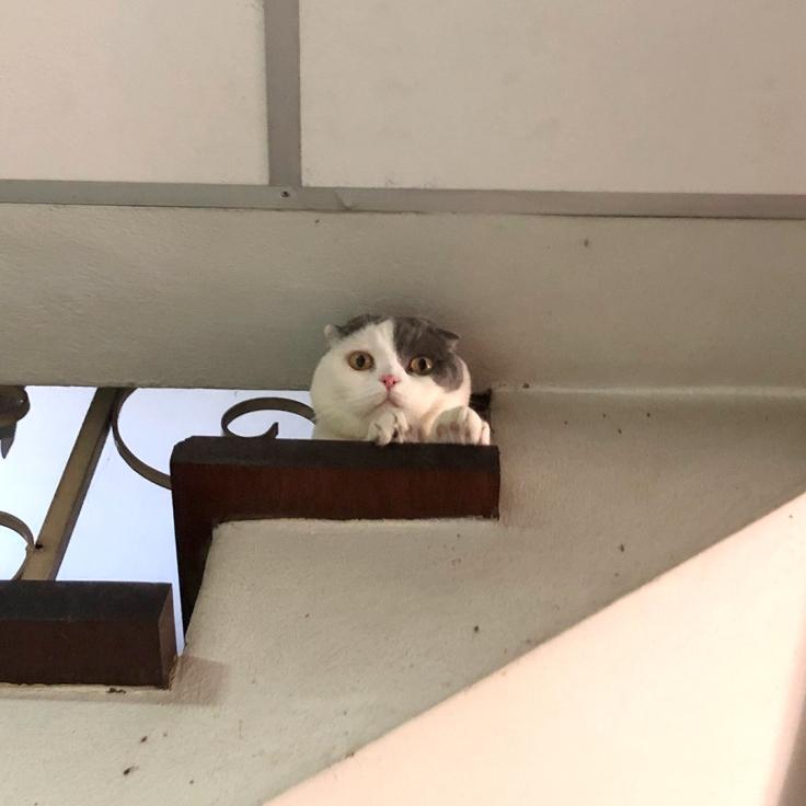 แมวชอบลอดช่องเล็กๆ
