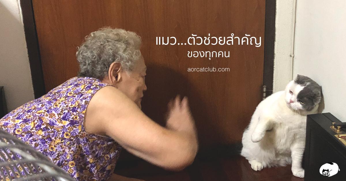 แมวช่วยเยียวยาจิตใจได้