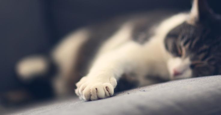 แมวละเมอเดิน ตัวกระตุก