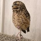 Akiba-Fukurou-Owl-café13_aorcatclub-