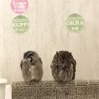 Owls in Tokyo