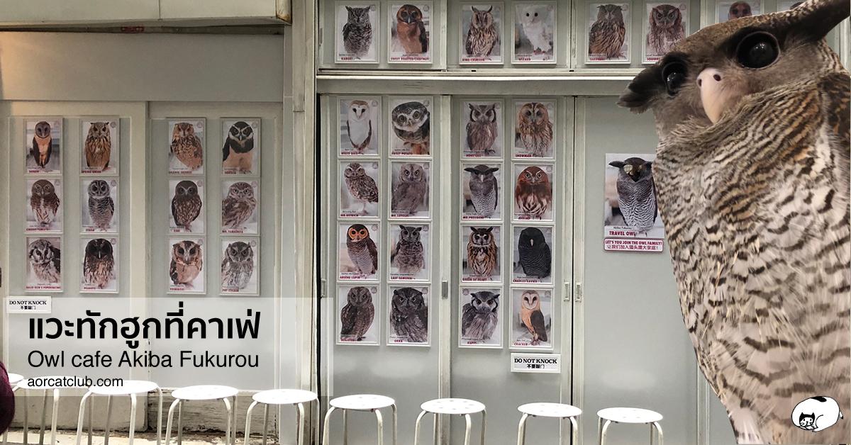 owl cafe in tokyo