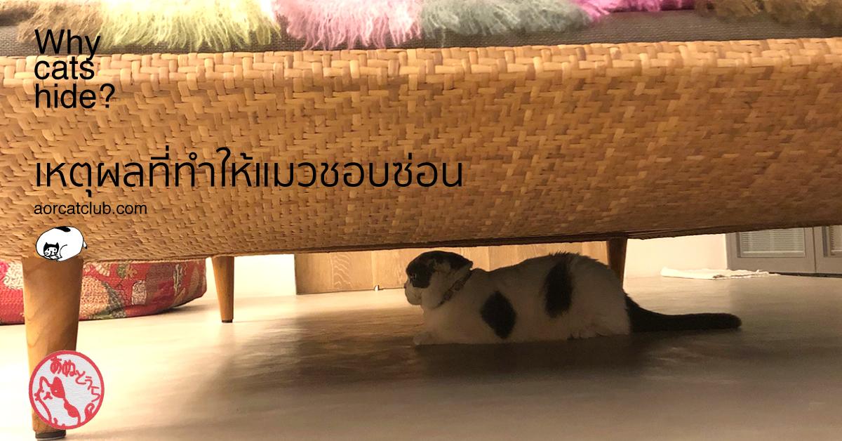 แมวซ่อนตัว