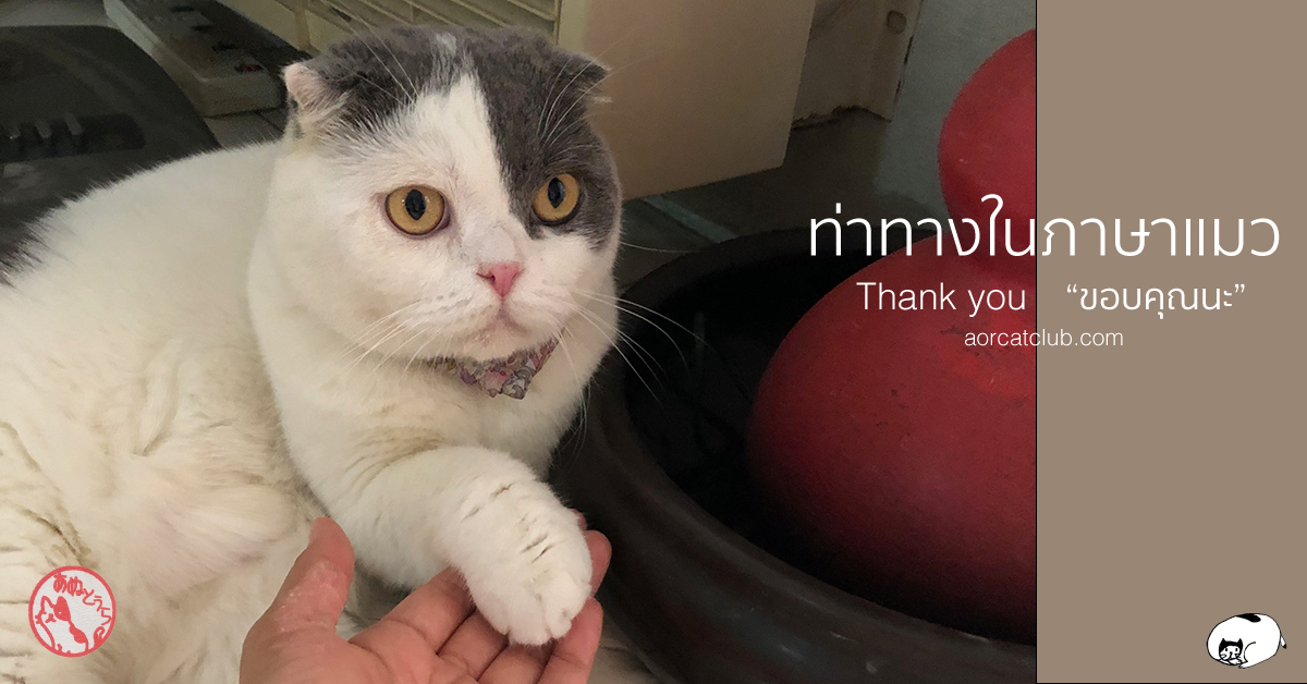 แปลภาษาแมว