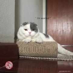 หน้าแมวกังวล_โกเมสแมว_aorcatclub