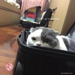 หน้าแมวเศร้า_โกเมสแมว_aorcatclub