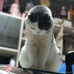 แมวเสียใจแมวขอโทษ_โกเมส_aorcatclub