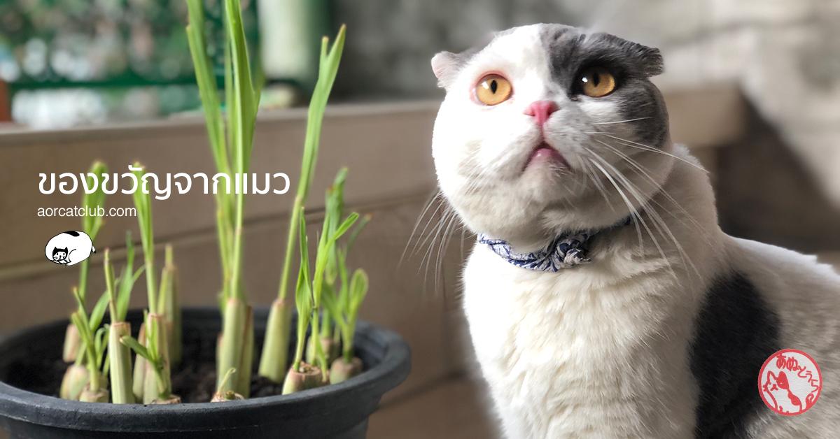 เลี้ยงแมวดีอย่างไร