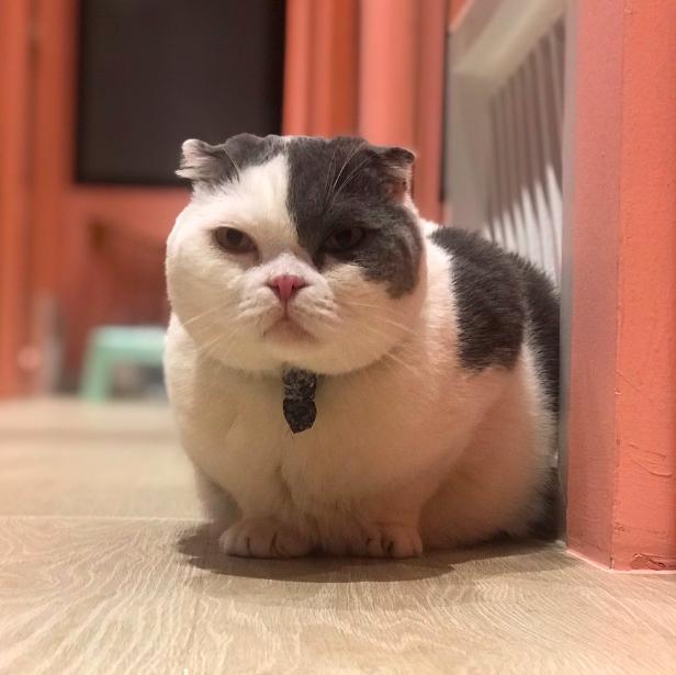 แมวตอนอยู่โรงแรมแมว