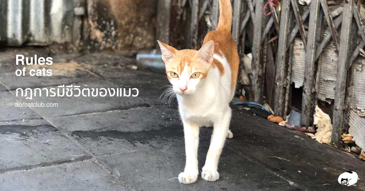 ชีวิตแมวกับคนคล้ายกัน