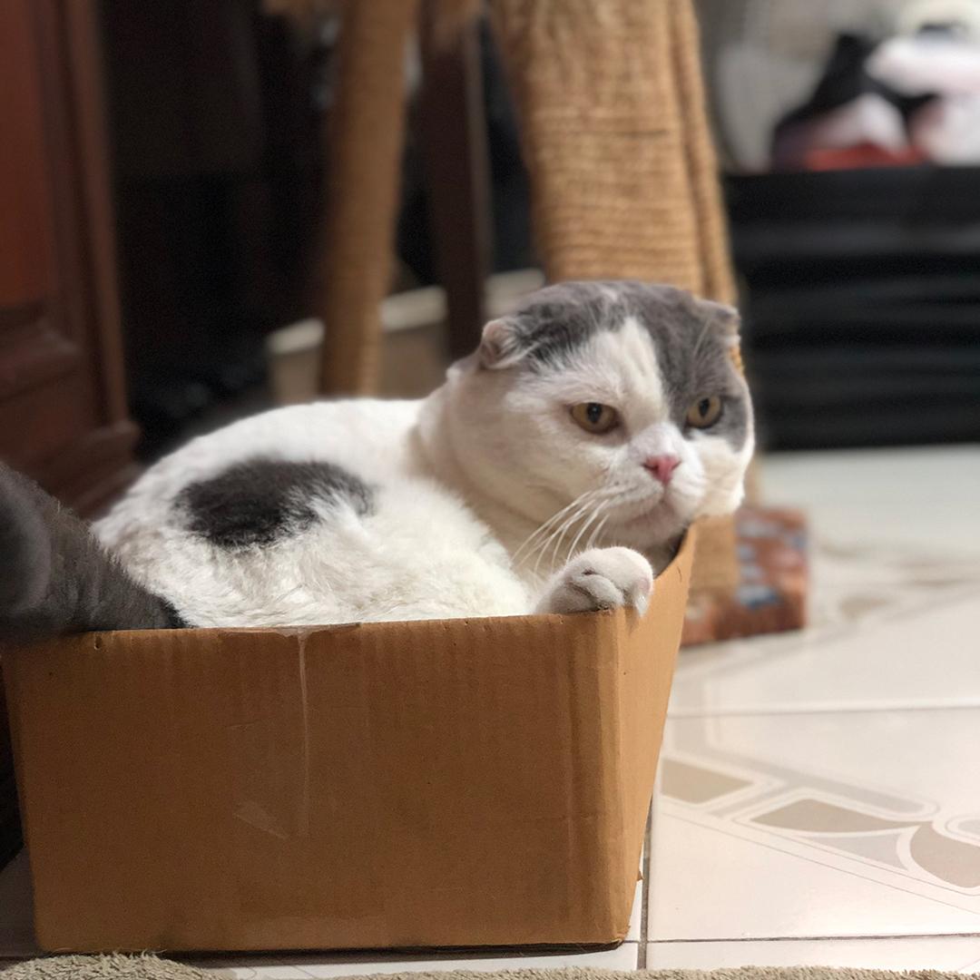 กล่องนอนแมว