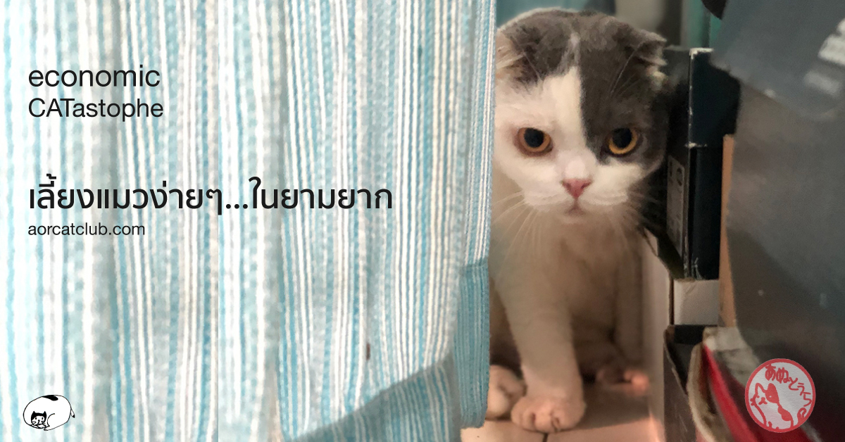 เลี้ยงแมวยังไงไม่แพง