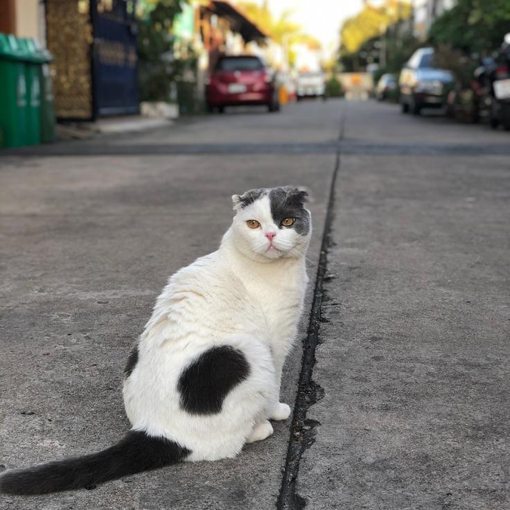 แมวติดโควิดได้