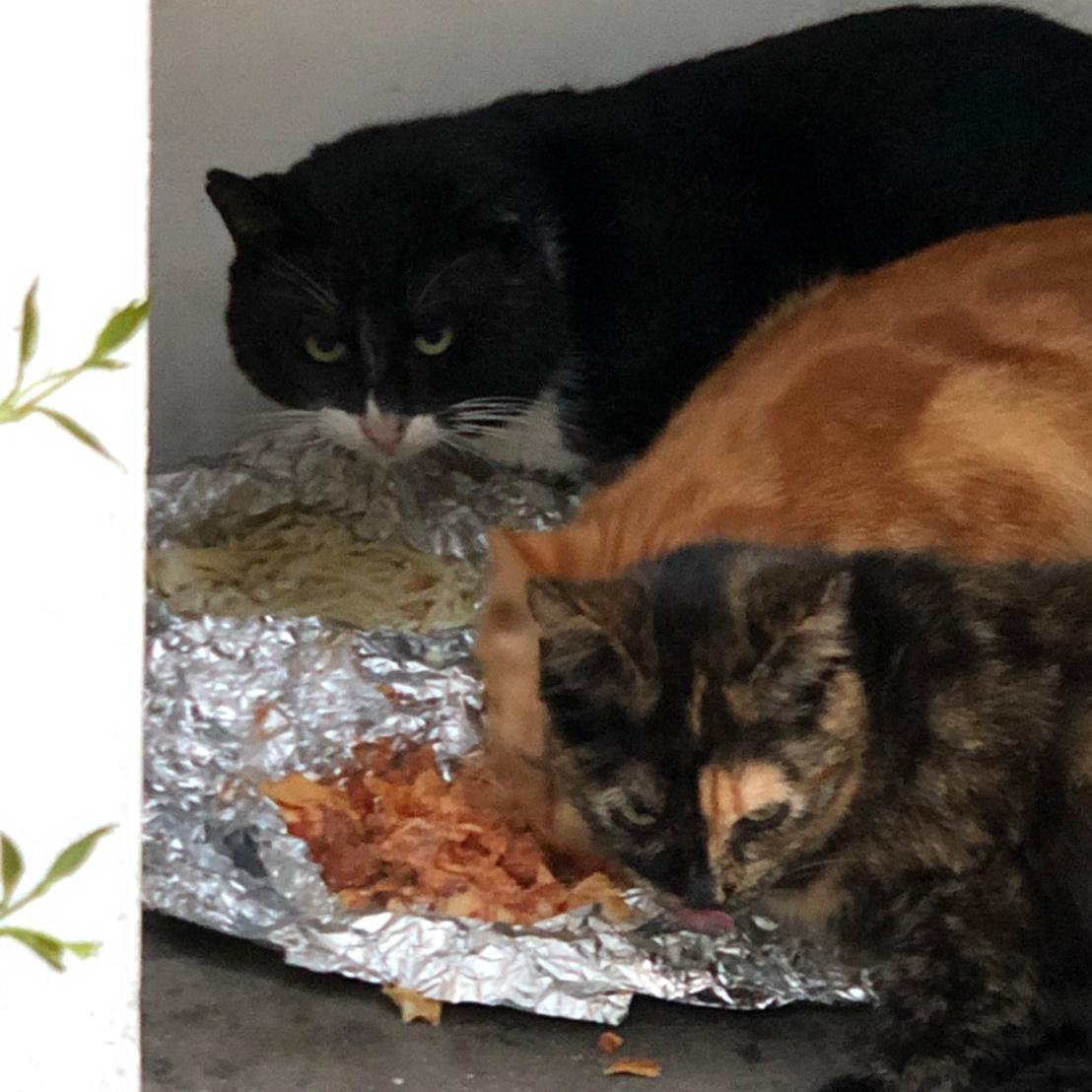 ให้อาหารแมวจร