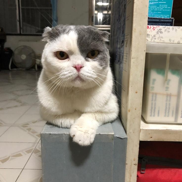 แมวมองเห็นอะไร