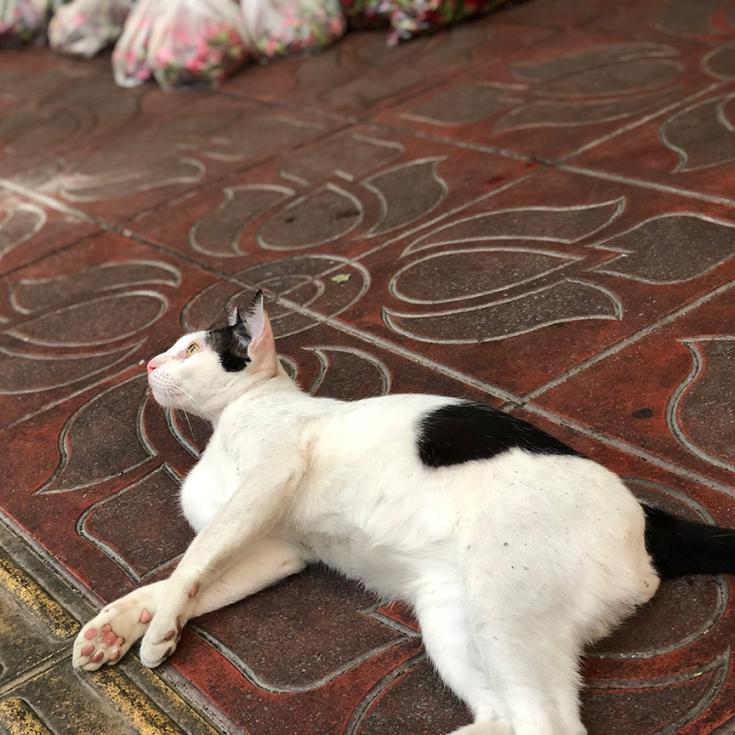 แมวอยากมีบ้าน