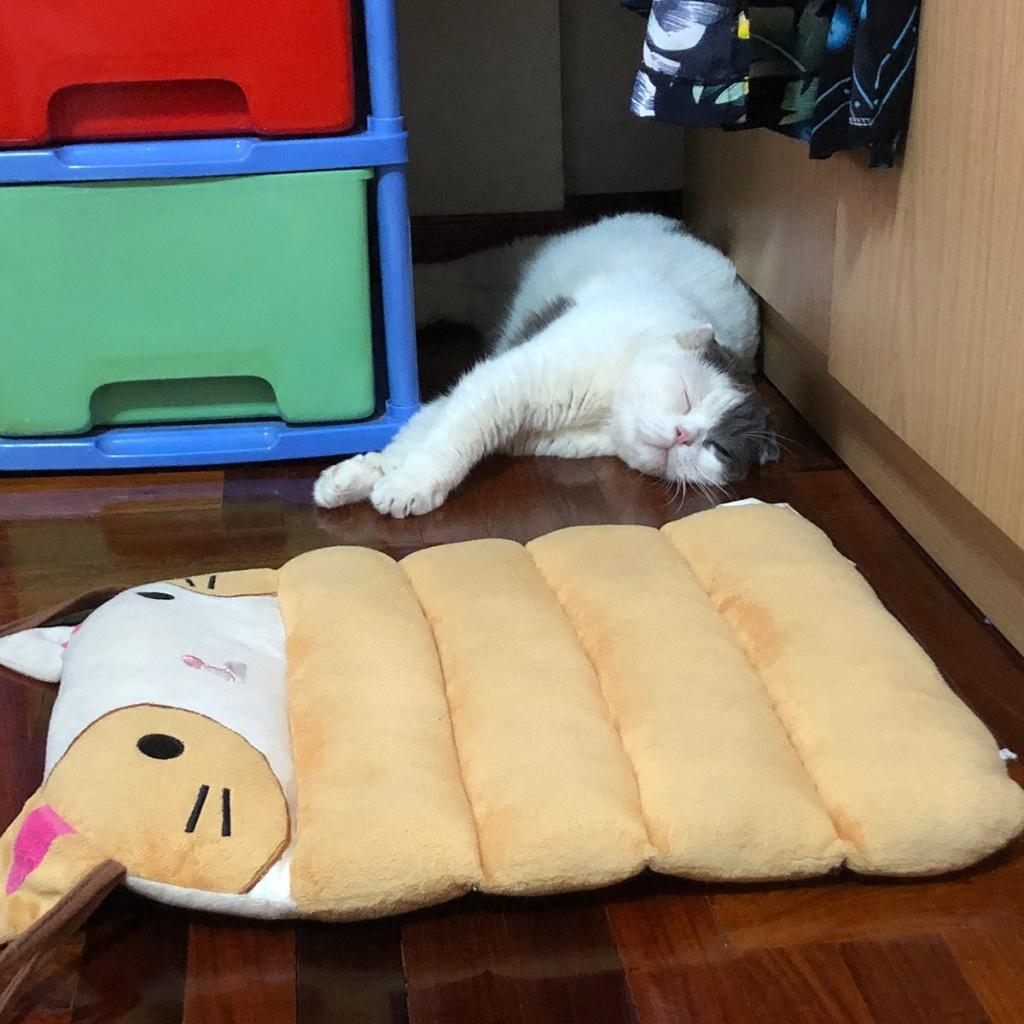 ที่นอนแมวลายการ์ตูน