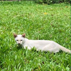 ที่นอนแมวบนหญ้า