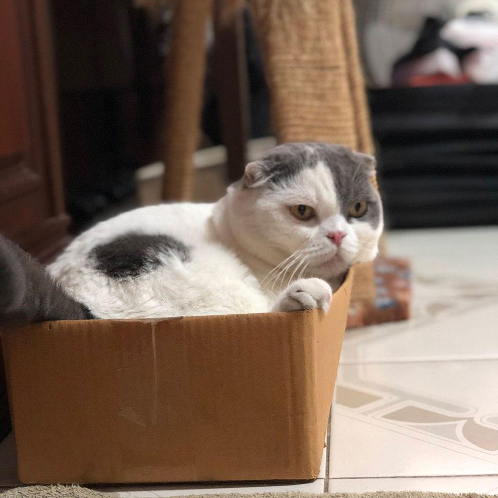 ที่นอนแมวในกล่อง