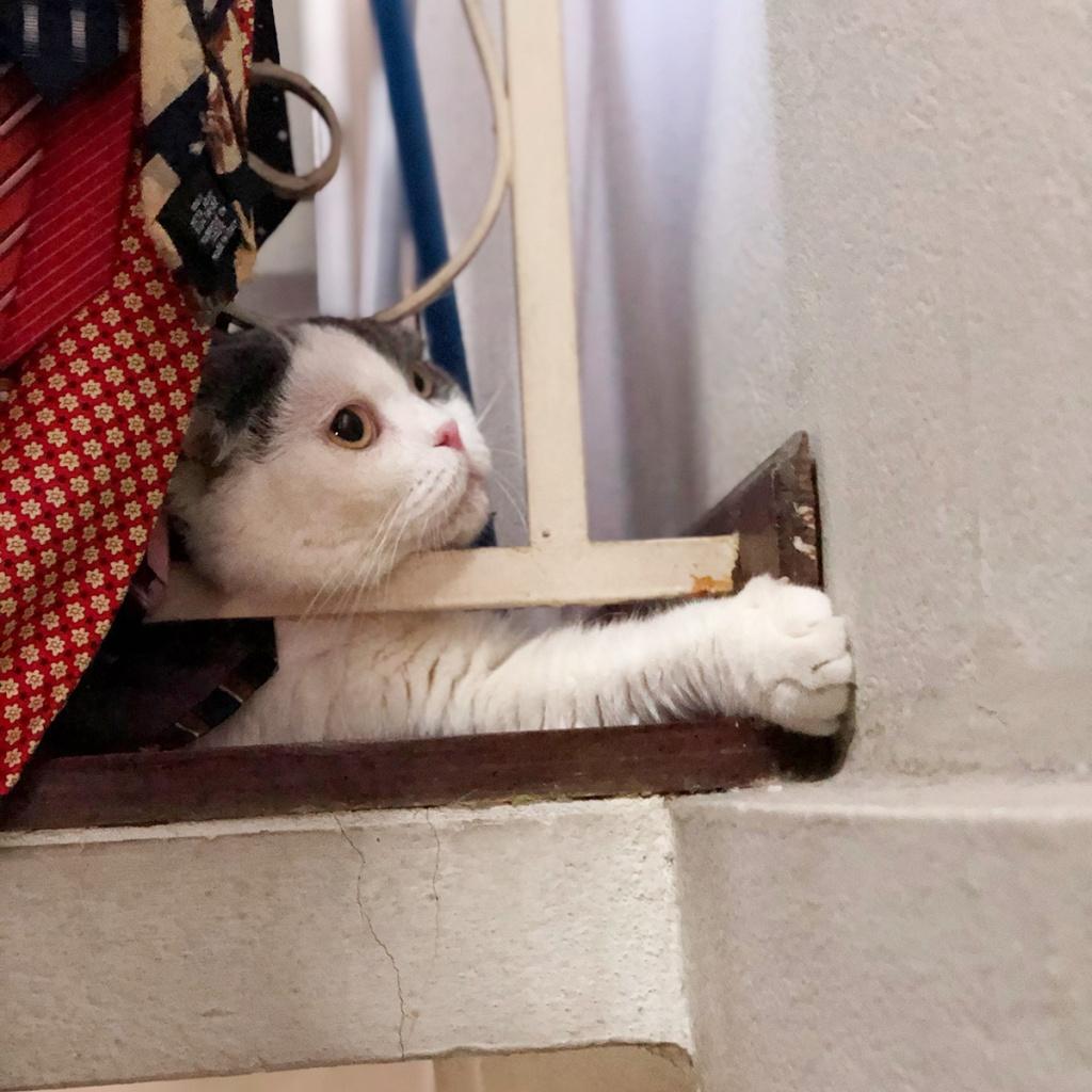 มุมในบ้านก็เป็นที่นอนแมว