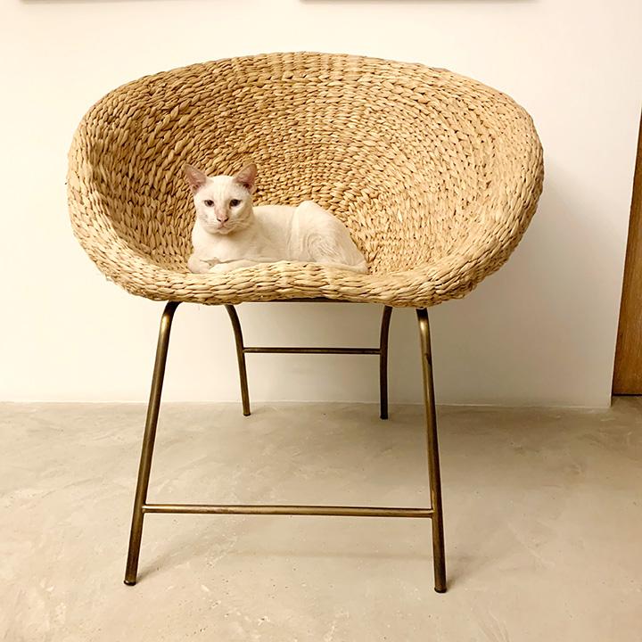 แมวบ้านต่างจากแมวป่ายังไง