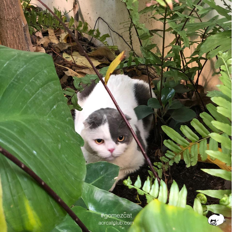 แมวป่ากลายเป็นแมวบ้าน