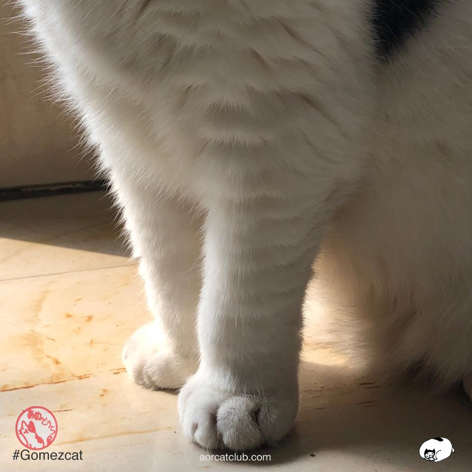 เรื่องน่ารู้น่ารักเกี่ยวกับอุ้งมือแมวมี