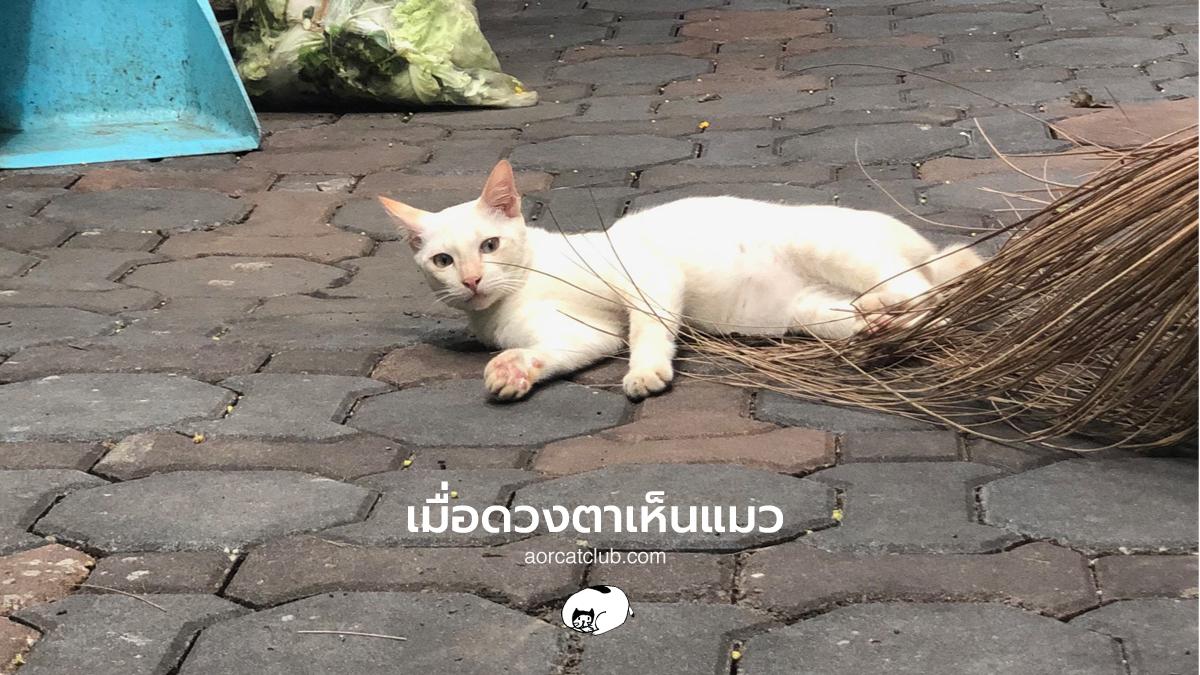 สัจธรรมที่อยู่ในแมว