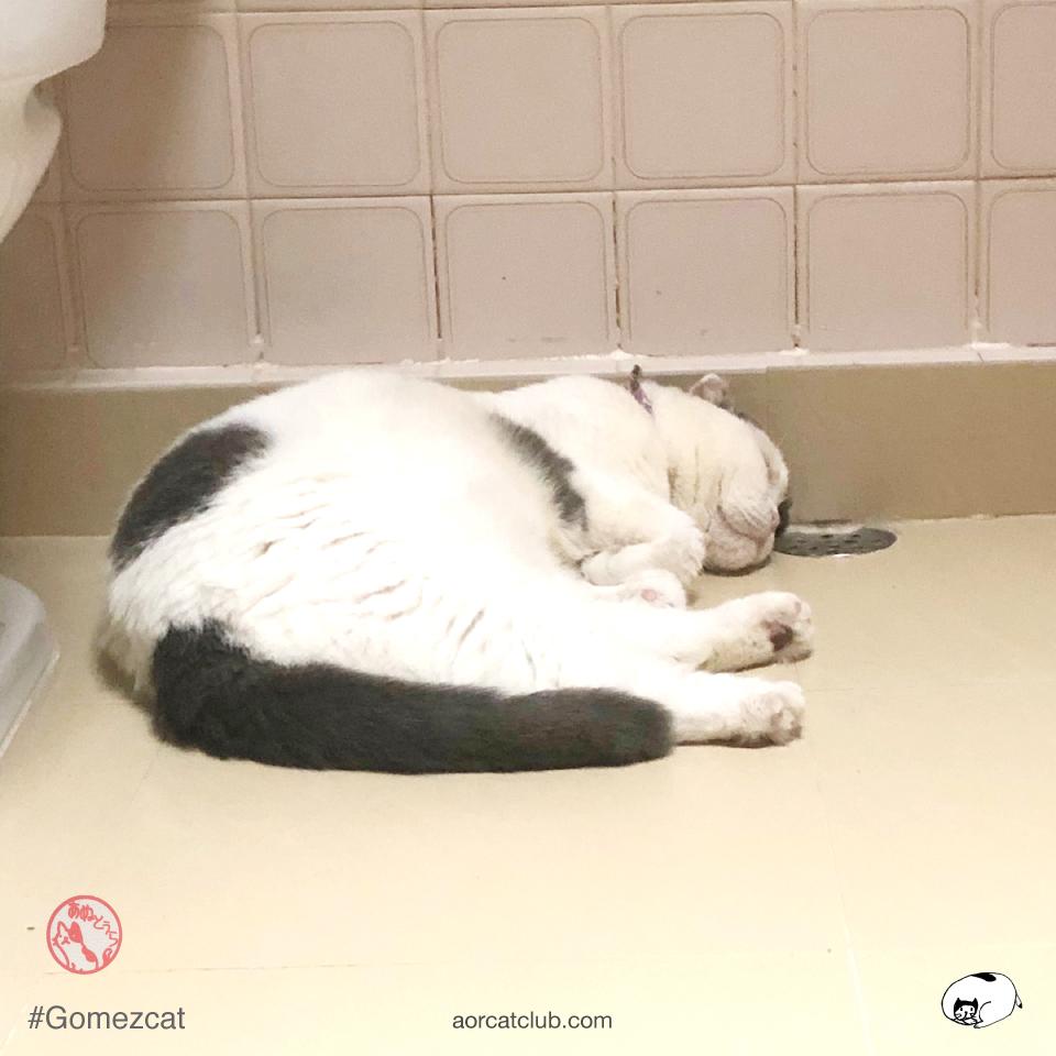ทำไมแมวชอบซ่อนในห้องน้ำ
