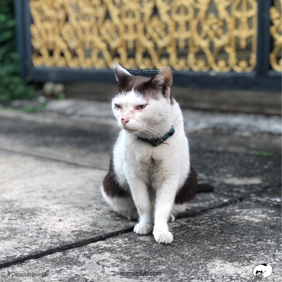 แมวนั่งรอเจ้าของ