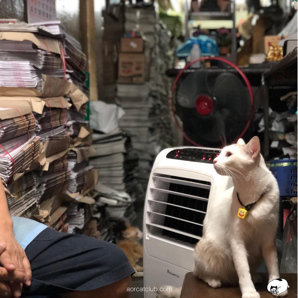 แมวร้านหนังสือ