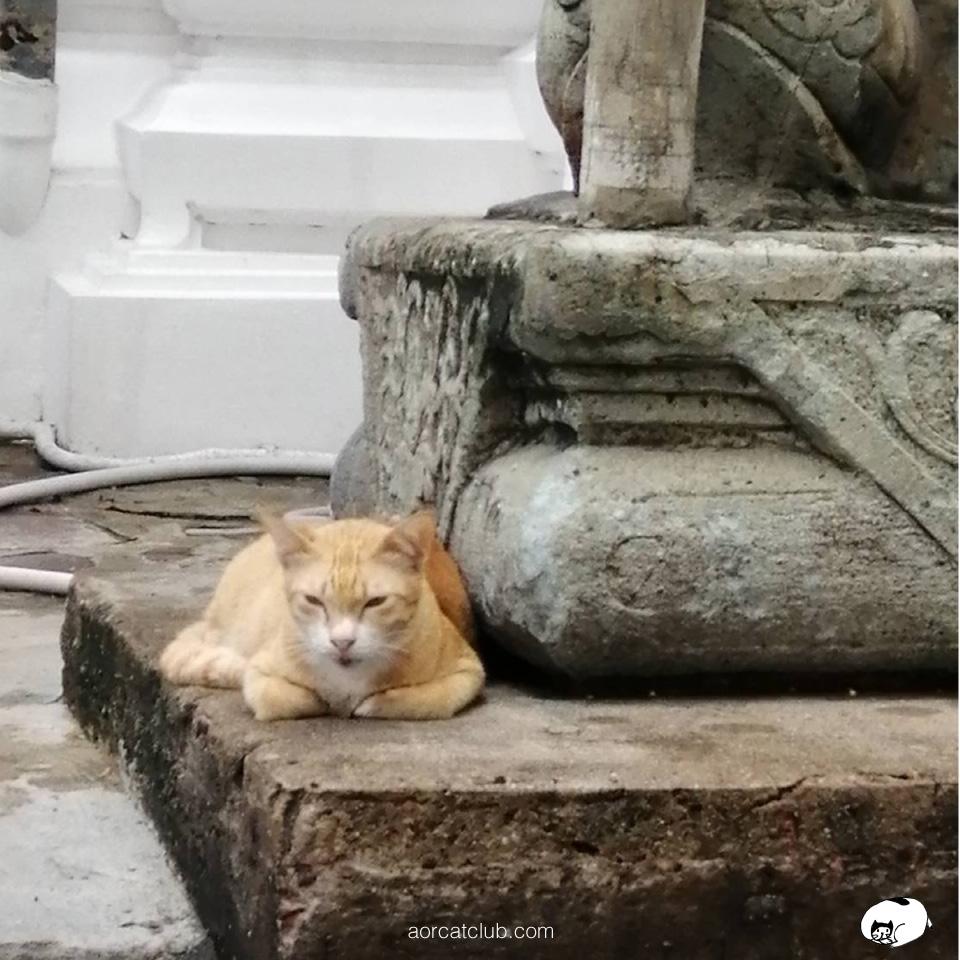 แมวนั่งสวดมนต์