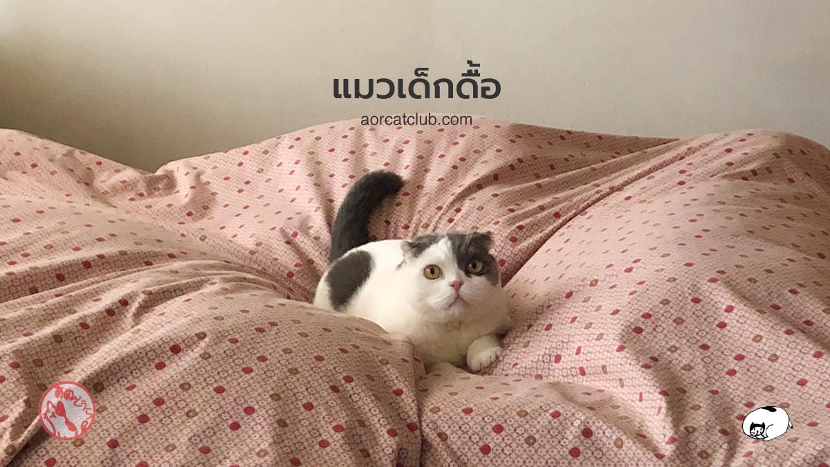 ทำไมแมวดื้อจัง