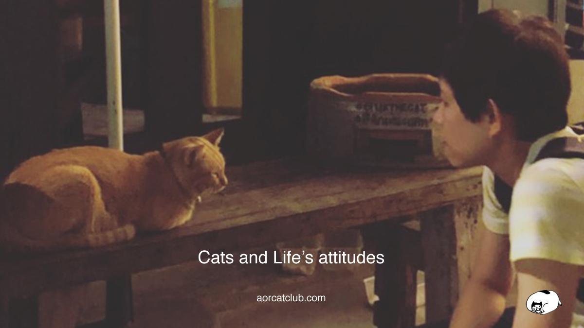 Blog แมว