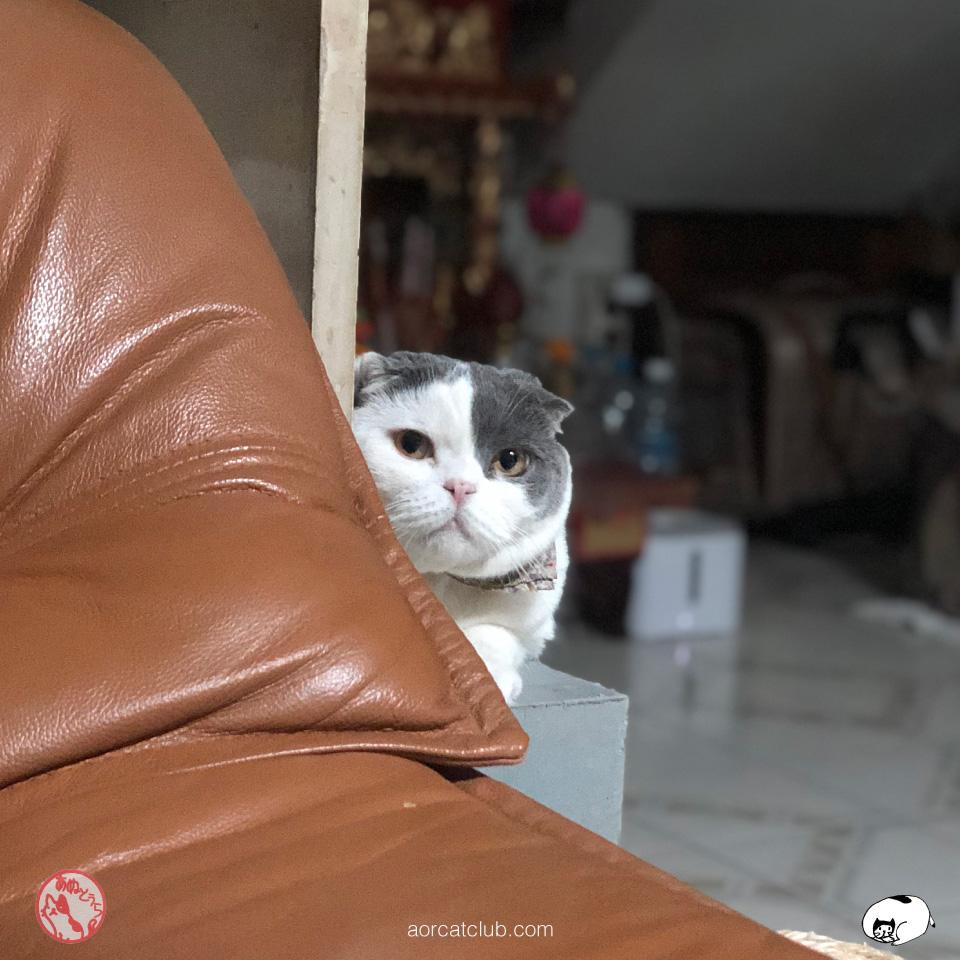 แมวสำคัญกับชีวิต