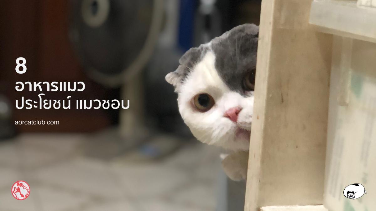 อาหารแมวยี่ห้อไหนแมวชอบ