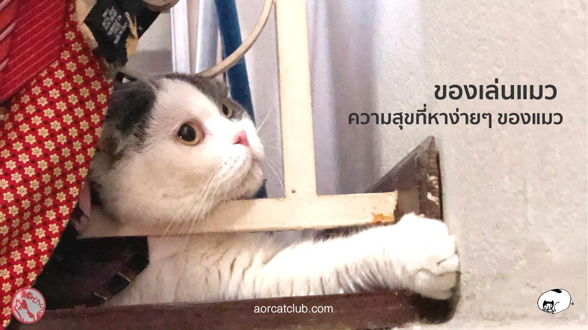ของเล่นแมว มีอะไรบ้าง ที่แมวชอบมาก