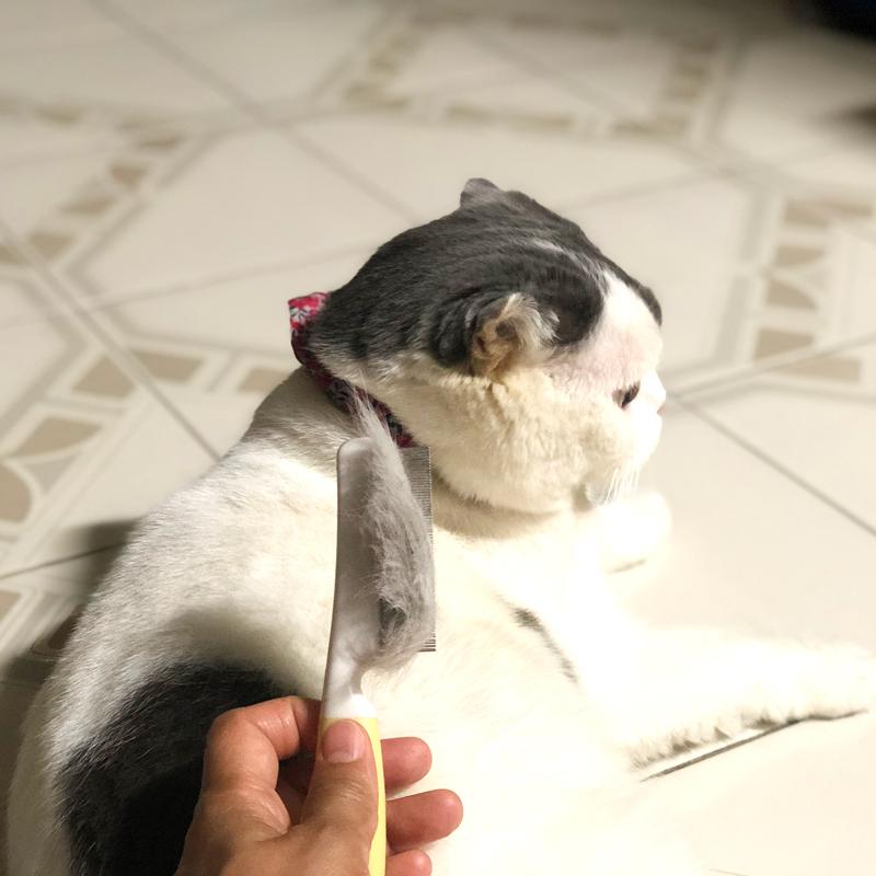 หวีขนให้แมว ช่วยแมวไม่ต้องกลืนขนเยอะ ช่วยคนทำความสะอาดง่าย