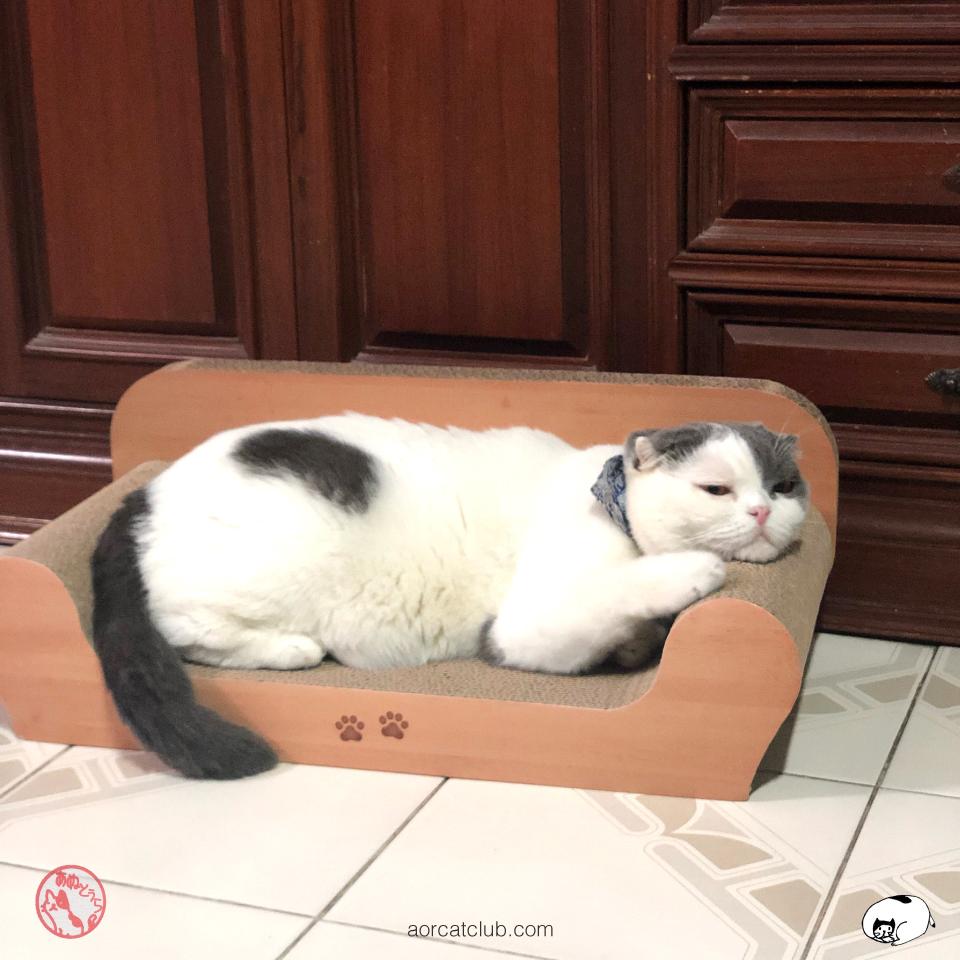 โซฟาแมว ที่ลับเล็บแมวอย่างดี